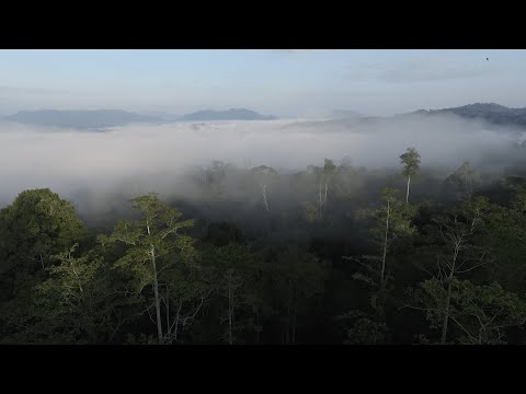 Danum Valley Conservation Area with Sticky Rice Travel