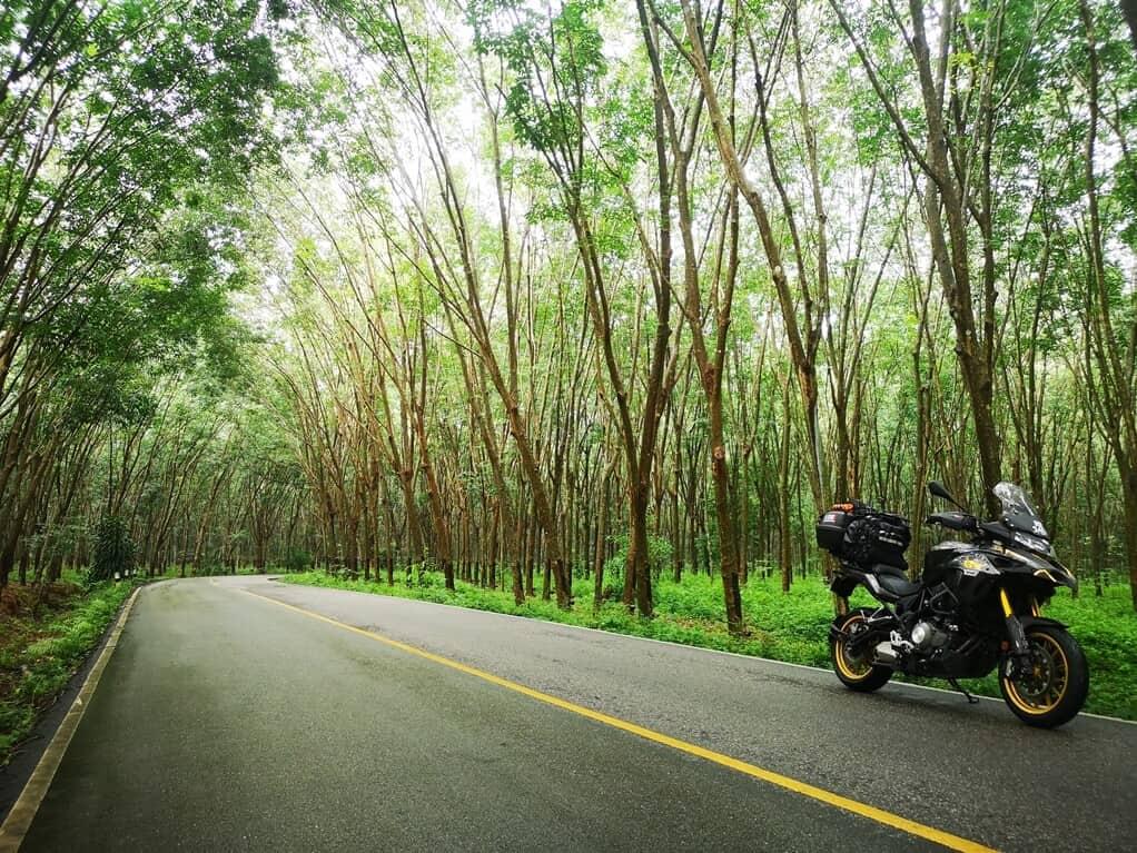 Surat Thani Forest
