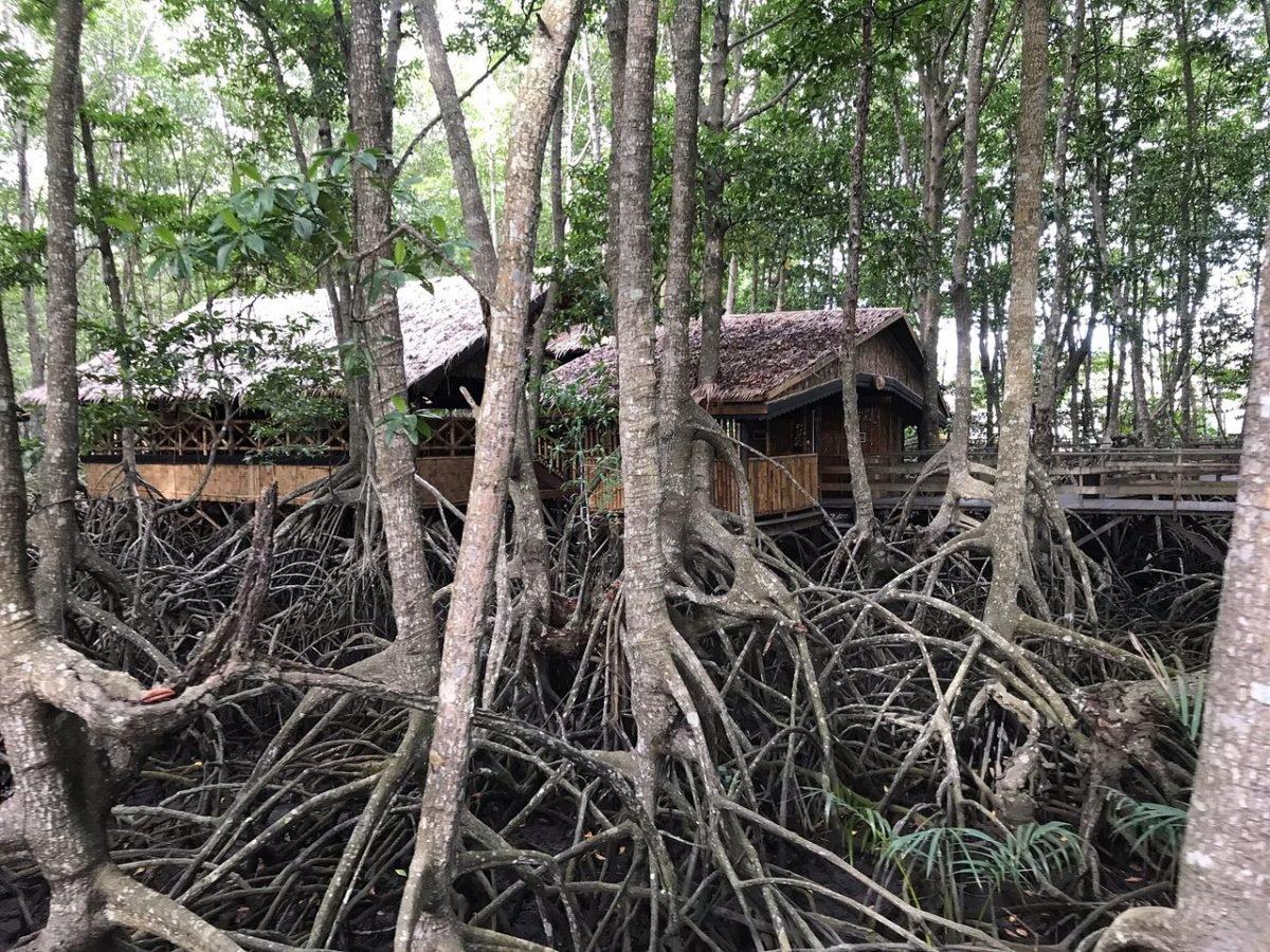 Sabandar Mangrove Park