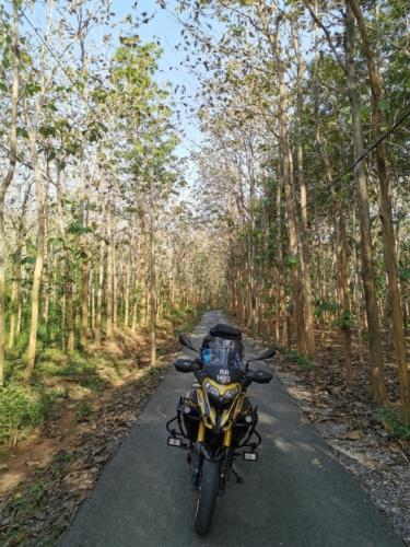 Rubber plantation route